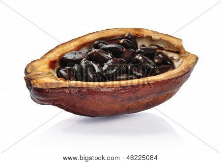 Fresh Cacao Fruit I
