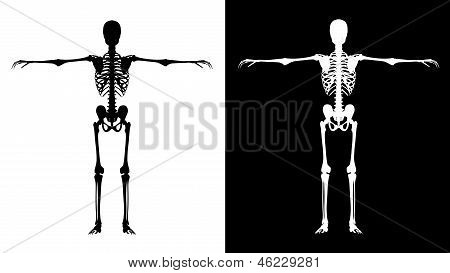 Skeleton Black - White