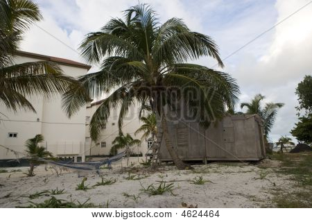 Old Shack And Palms