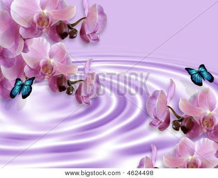 Orchids And Butterflies Background