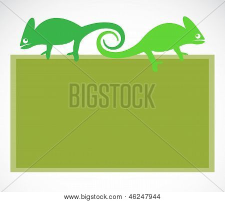 School blackboard with chameleon