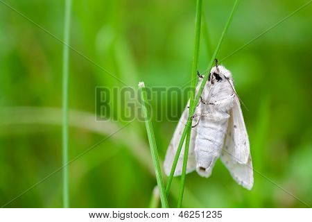 white butterfly on a summer meadow