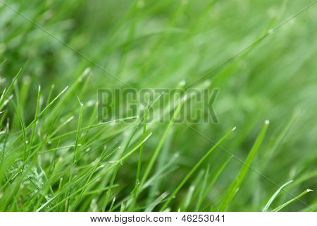 Canted Green Grass Close-up