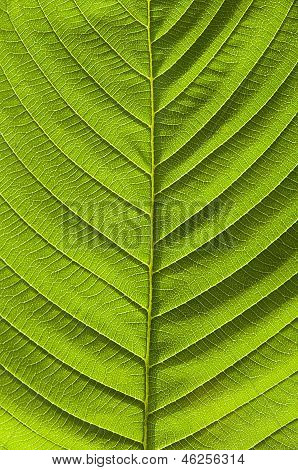 texture of green leaf tree