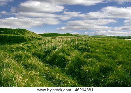 Tall Green Grass On The Dunes Of Ballybunion Golf Course