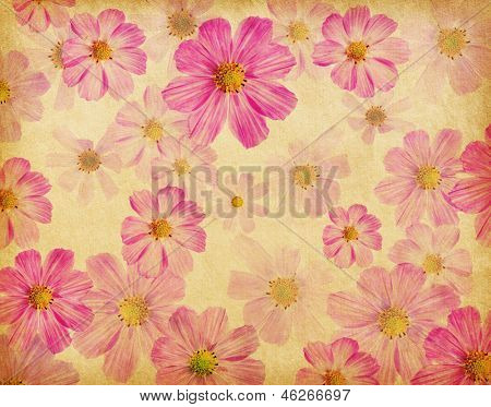 vintage paper textures with beautiful pink flowers. cosmea