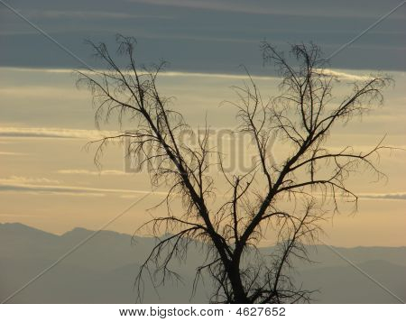 Bare Tree On The Grasslands