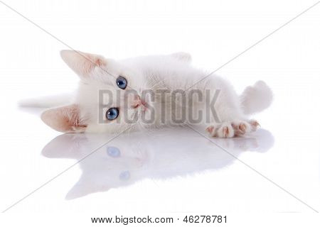 The White Kitten With Blue Eyes Lies On A White Background.