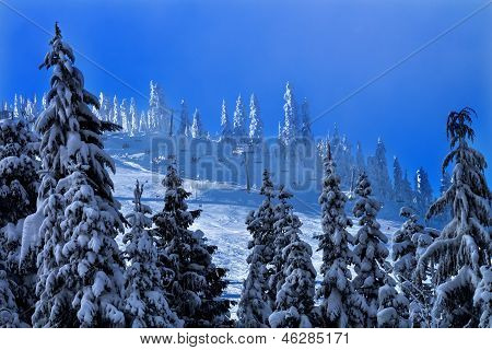 Sking Chairlifts Snowy Trees At Snoqualme Pass Washington