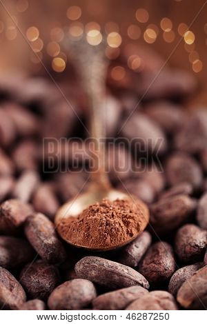 cocoa powder with sugar in spoon  on roasted cocoa chocolate beans background