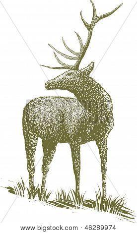Woodcut Elk