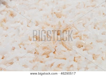 Close Up Texture Of Cooked Mix White And Brown Rice