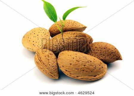 Almond Group