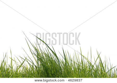 Gras Over White