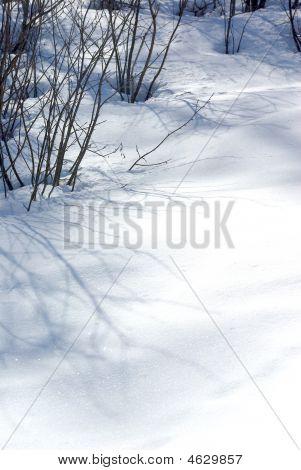 Snow Detail