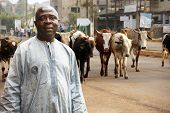 stock photo of herd  - African cattle farmer or herdsman leading his herd of cows on a busy city street - JPG