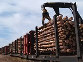 image of freightliner  - Crane loading cut logs on a railcar - JPG