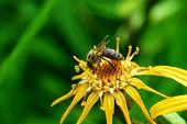 Bee On Flower.