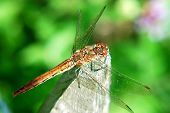 Dragonfly, Damselfly.