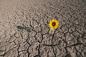 foto of dead plant  - dry soil of a barren land and single growing plant - JPG