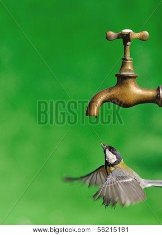 Bird on a tap