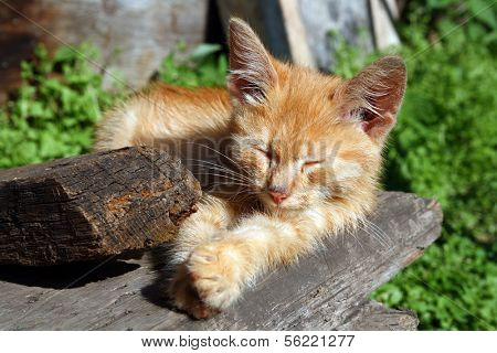 small cat sleeping on wooden porch