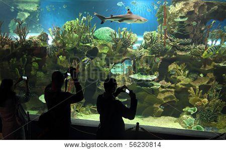 people shooting shark in oceanarium