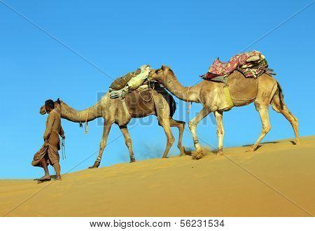 cameleer in desert - camels caravan on sand dune