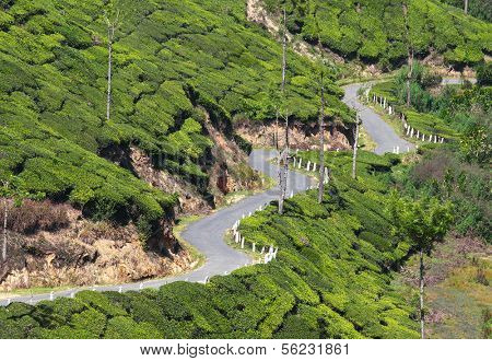 winding road between tea plantations in Kerala India