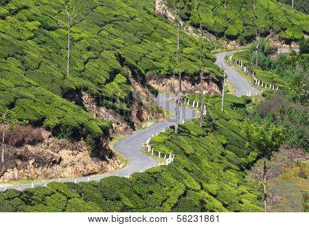 winding road between tea plantations in Kerala India
