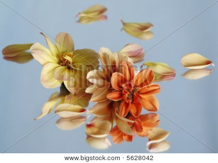 Flowers Reflected