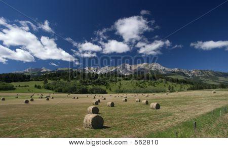 Großen runden In einem Feld von Montana