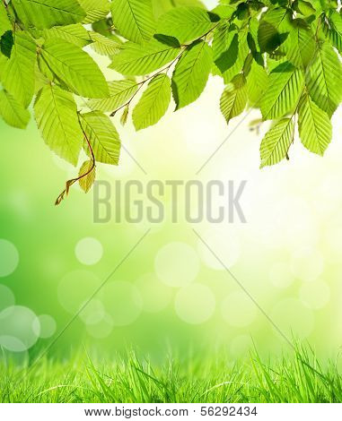 Hornbeam leaves with abstract blur background