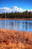 image of dick  - Winter Arizona lake with feeding dicks in background - JPG