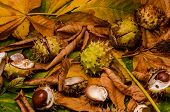 stock photo of auburn  - conker and leaves as background at autumn - JPG