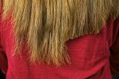 image of split ends  - Split ends cutter away from long ruined hair - JPG