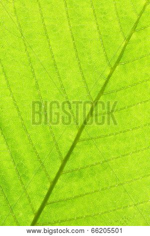 Leaf Structure Close Up Background