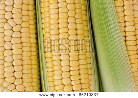 Corn Sweetcorn
