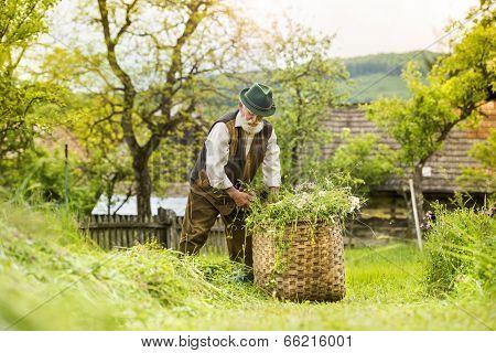 Old farmer