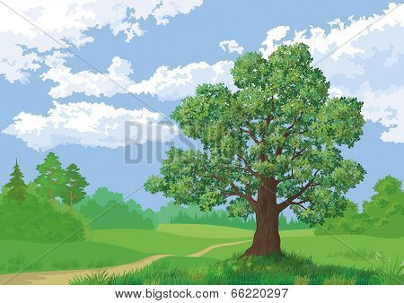 Landscape, summer forest and oak tree