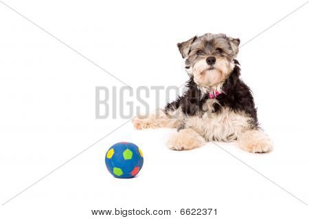 A dog lying with a ball