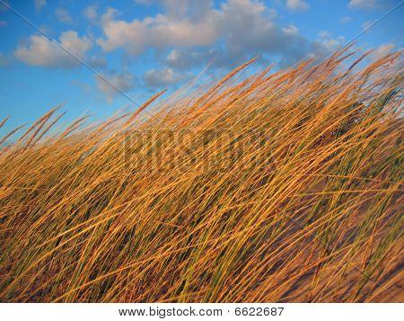 Windy Dune