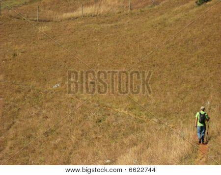 Man Walking On Dirt Path Dead Grass Stick Landscape