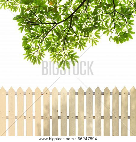 White fences with green leaves and white background