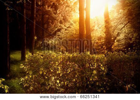 Mystical Beautiful Dense Forest.