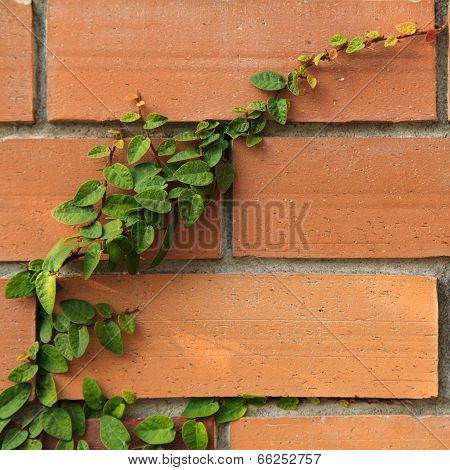 Leaf On A Brick Wall