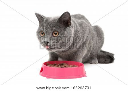 Cat Eating Food From A Bowl On A White Background