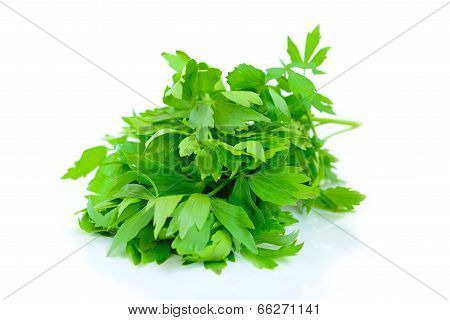 Levisticum officinale (lovage)