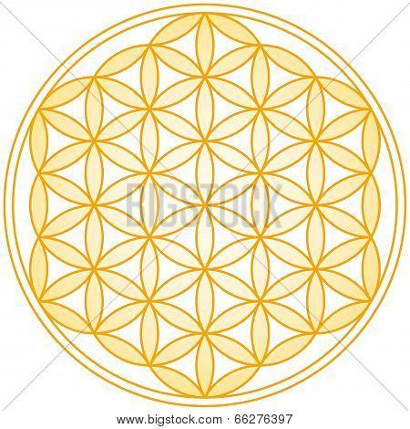 Flower of Life Golden Gradient