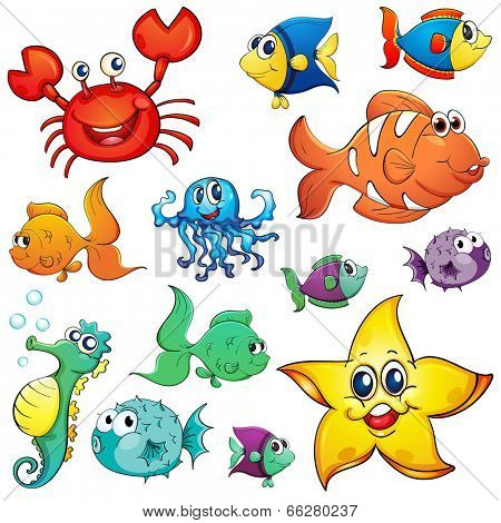 Illustration of the different sea creatures on a white background